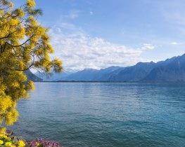 Montreux, thumbnail